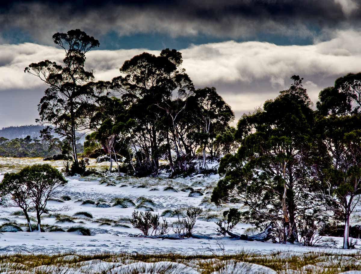 Cradle Mountain region in the snow