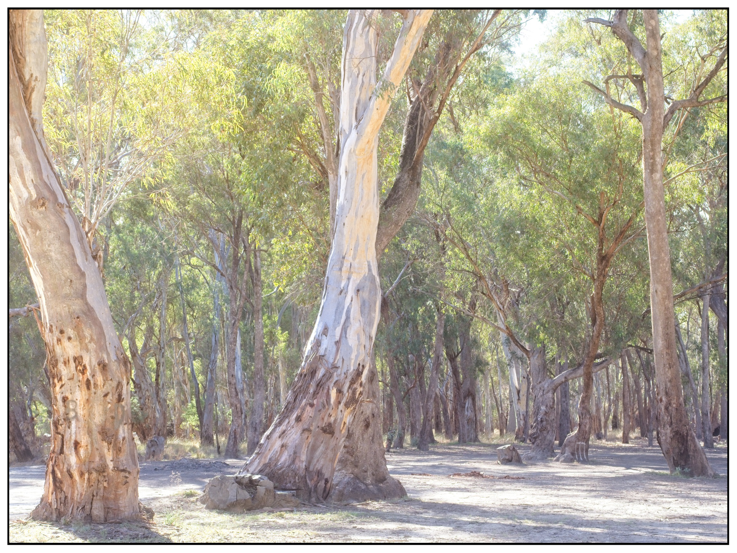 dispersed campsite along the Murray River with spray painted cricket stumps on a tree